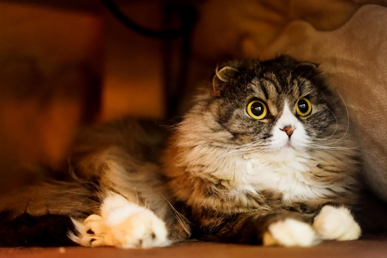 動物高度医療センター ネコ