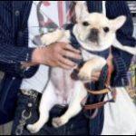 草なぎ剛と一緒にいた犬(フレンチブルドッグ)の名前は何?泣いてた理由や散歩コースも!