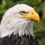 ドローンを捕まえる鷲について!オランダ警察の取り組みがスゴイ!
