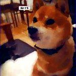 和田正人は柴犬好き!?飼っている柴犬の名前!?画像や散歩の様子は!?