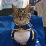 セイバーキャットが可愛い!コスプレ猫の名前や飼い主についても!